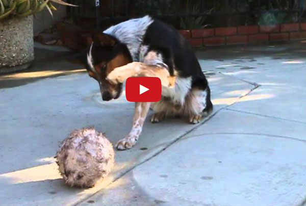 Omar , Amazing Trainer of The smartest dog ever ! - Breathtaking Video