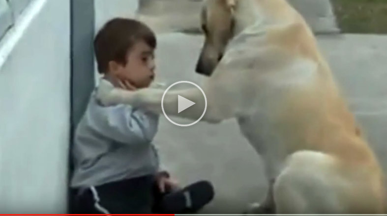 So touching : The Dog and Disabled Child, a Very Psychological Support Session
