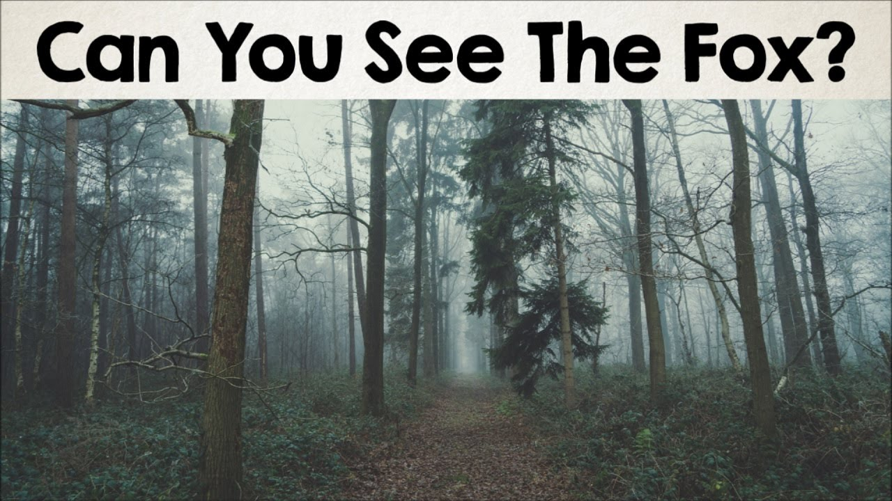 the most amazing optical illusion pictures